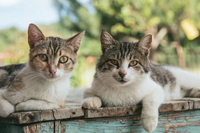 Koty pobierają wodę z pożywienia dlatego mokra karma jest dla nich odpowiednia